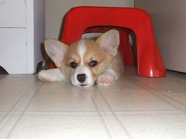 Winnie of Pennsylvania: #Corgis Make Everything Better!