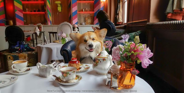 #Corgi Teatime Fit for a Queen — Coming SOON to London!