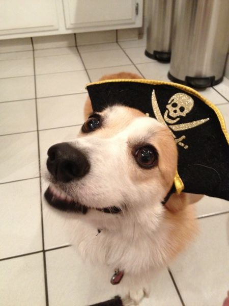 Lexie the cheesy pirate.