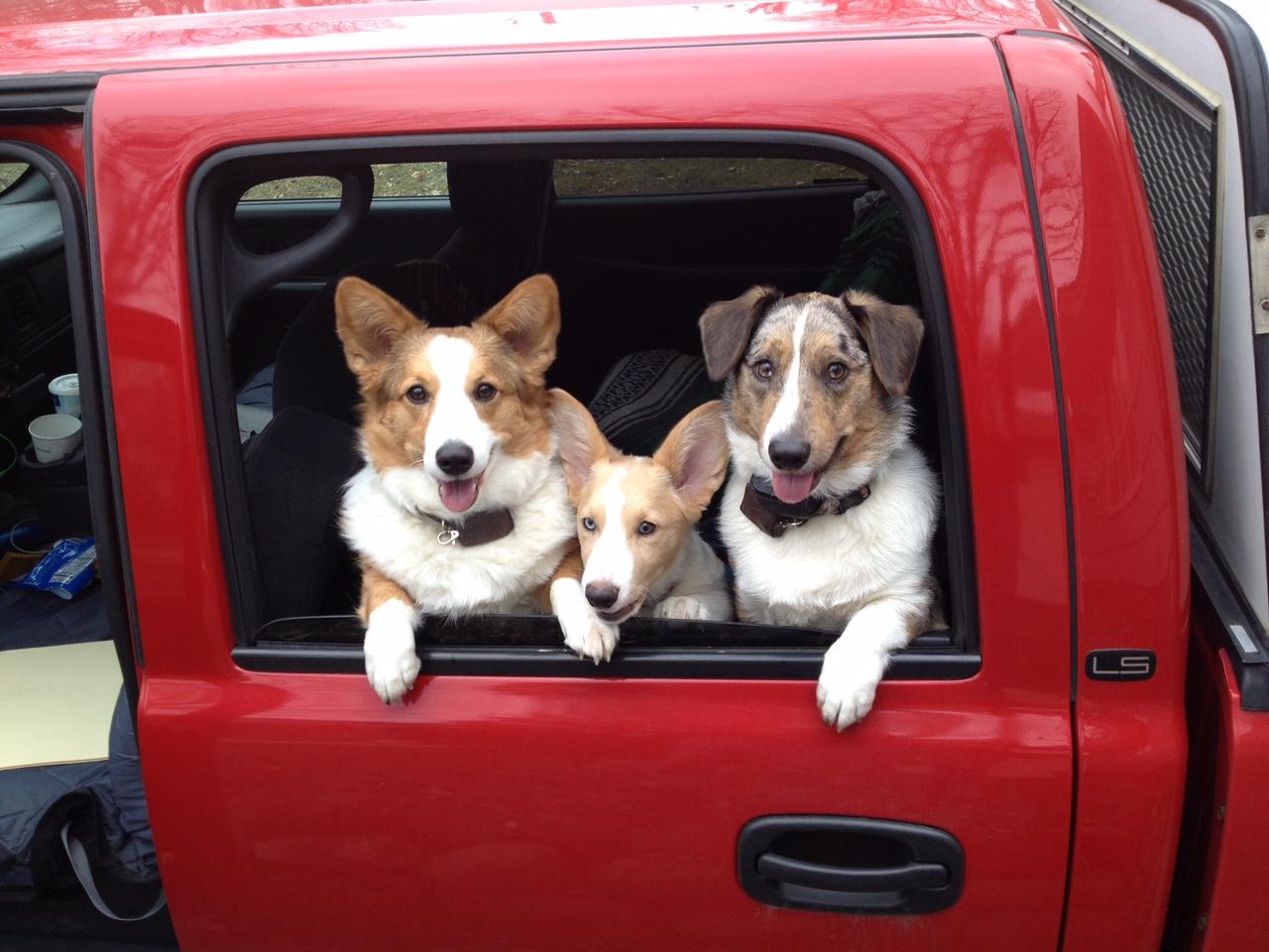 Ike, Iago and Hudson