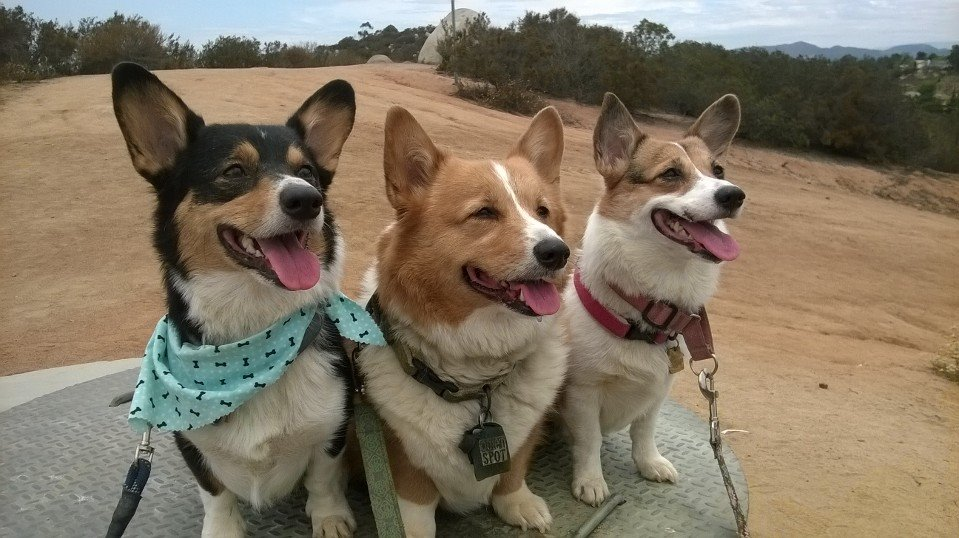 Copper, Sidney and Connie of California