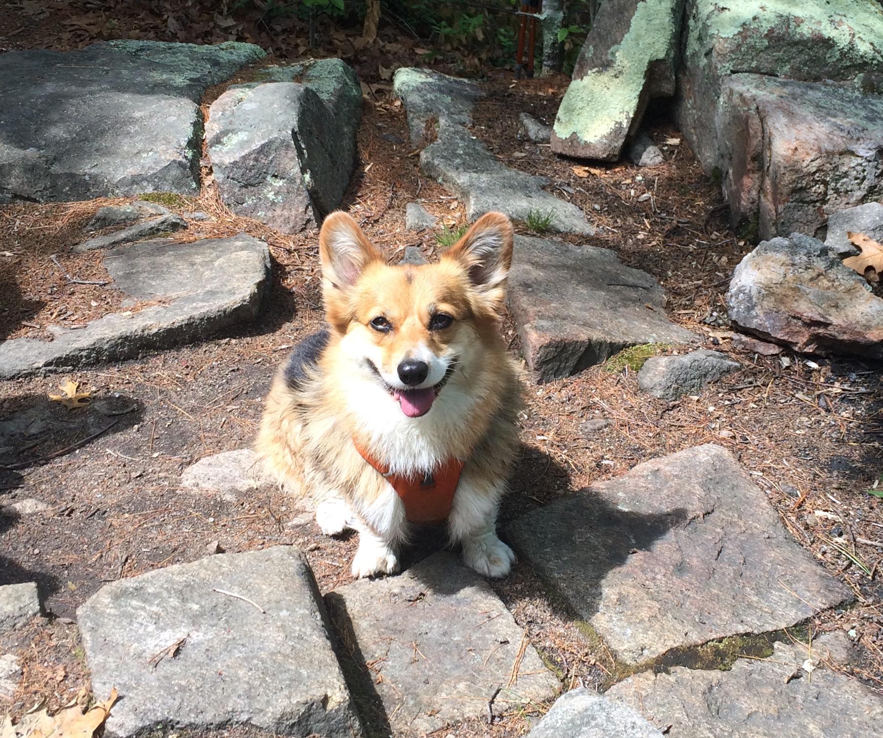 Fidget enjoys a trail hike.