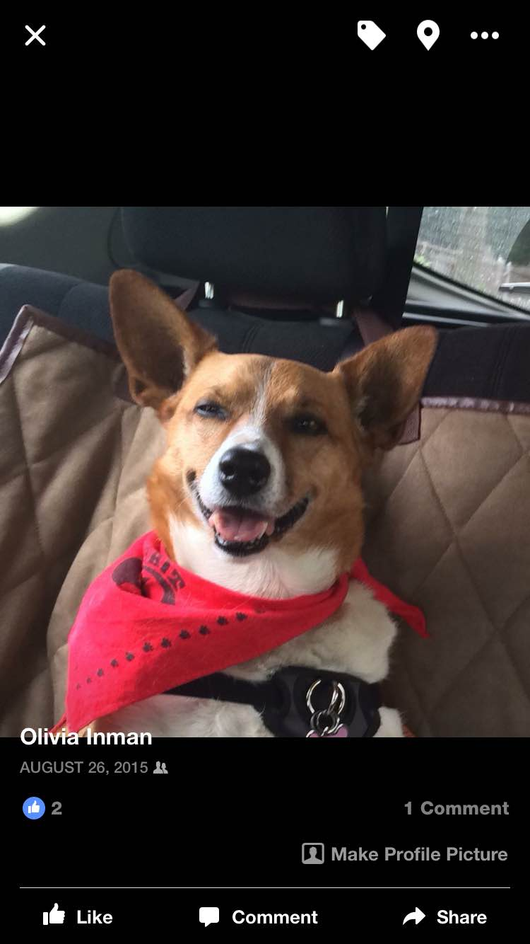 Ten year-old Corgi mix Maddie had just finished visiting a nursing home when she beamed this smile. Her smiles brighten everyone's day!