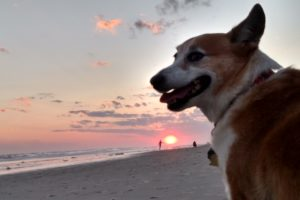 Throwback Thursday: Cheese Please! 29 Seriously Sweet Corgi Smiles