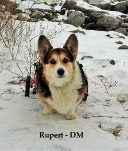 Rupert DM