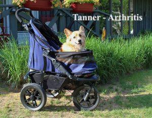 Tanner Arthritis 2-2