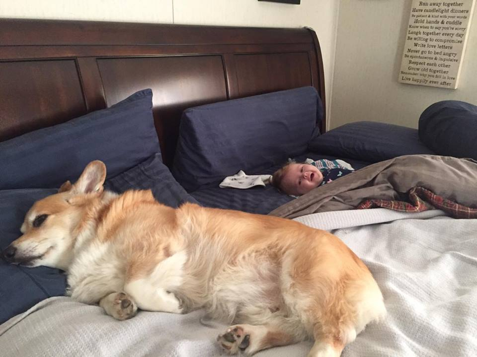 bedbuds