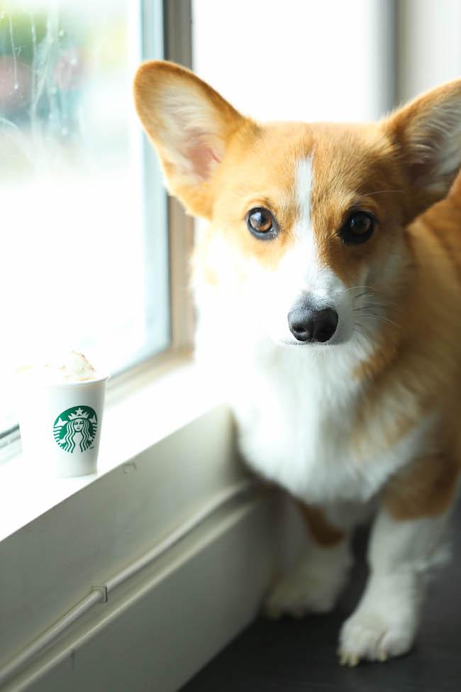 http://damndelicious.net/2015/09/15/healthy-pumpkin-puppuccinos/