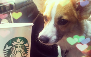 Monday Funnies: Corgis + Coffee!