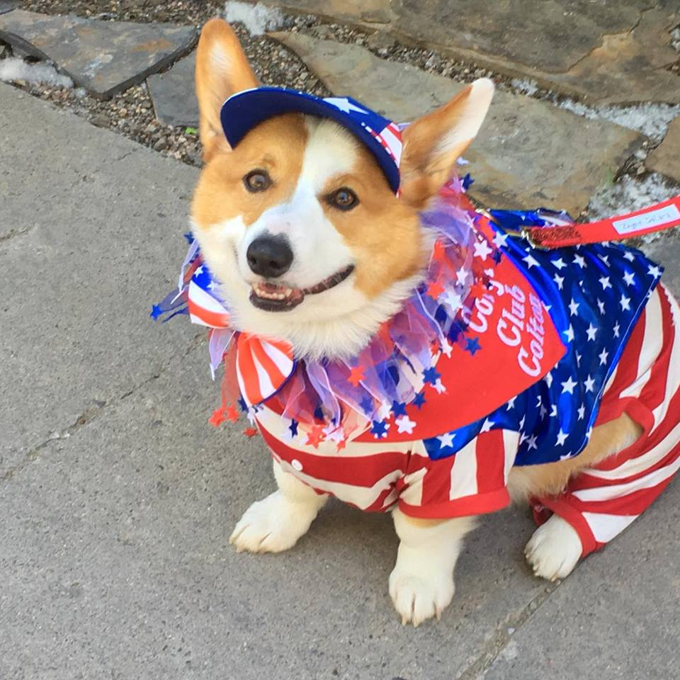 Corgi Club participated in the Telluride Town Parade in Colorado. Photo: Ginger Sirin