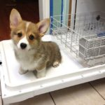 Wayback Wednesday: The Corgi Pre-Rinse Cycle
