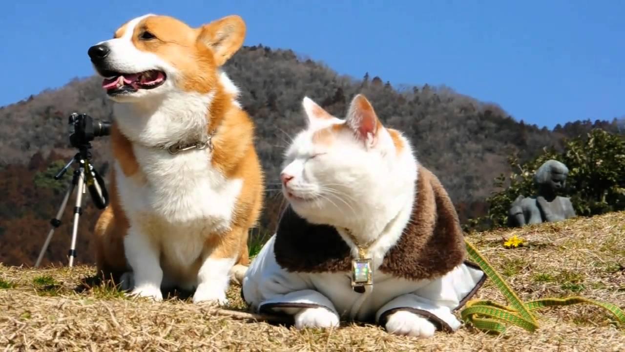 Goro and cat.