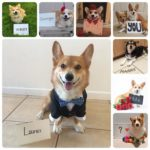 You, Me & Corgi Make Three!