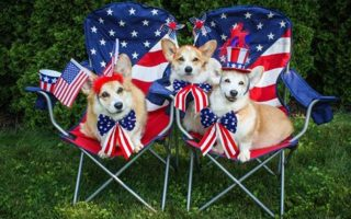 Stars + Stripes + Corgipants!