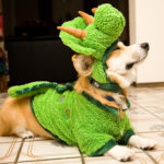 You Say #Corgi, I Say Dino-Mite!