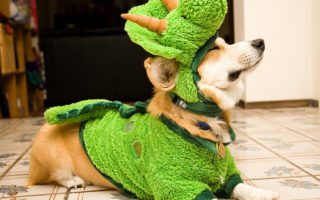 Flashback Friday: You Say #Corgi, I Say Dino-Mite!