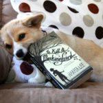 Summer Reading Program — Corgi Style!