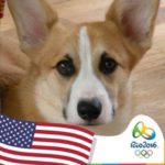 Throwback Thursday: Corgis At The Olympics — Say CHEESE!