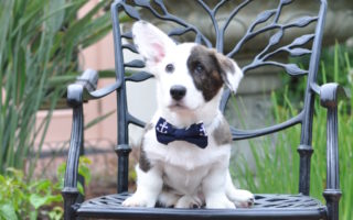 It's Bow Tie Tuesday (again)!