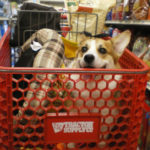 Corgis On Aisle Five!