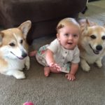 Lillian, Dierks and Sadie Bell: Still Growing Up CORGI!