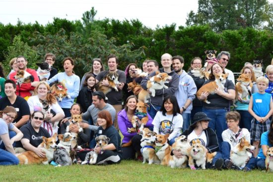 North Carolina Corgi Picnic / dailytarheel.com