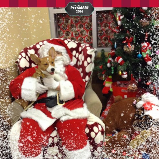 somehow corgis meeting santa and an occasional abominable snowman makes everything better go figure
