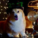 Happy New Year's Eve, Corgi Nation!