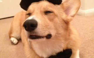 10 Corgi Smiles + Silly Hats = Perfection!
