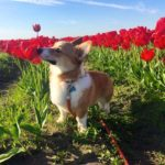Tiptoe Through The Tulips!