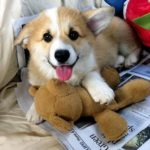 (Almost) Wordless Wednesday: Be My Teddy Bear!