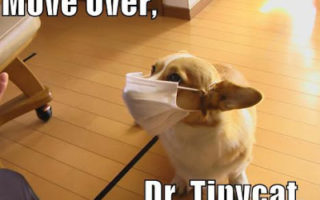 The DOGtor's orders.