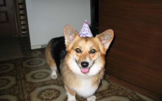 It's My Party and I'll Corg If I Want To!
