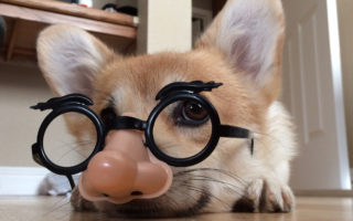 Meet CoRgO, the Missing Marx Brother!