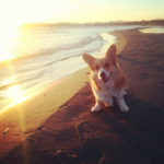 (Nearly) Wordless Wednesday: 11 Sunsets CORGI-fied!