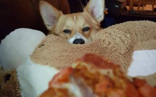 Throwback Thursday: 14 Corgis (and one Doxie) Who Will Have Whatever You're Having
