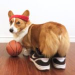 Corgi Hoop Dreams