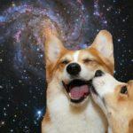 Momos In The Milky Way: 18 Epic Space Corgis