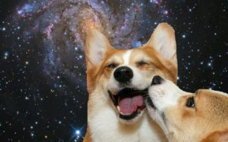Momos In The Milky Way: 18 Epic Space Corgis