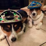 Wordless Wednesday: 10 Corgis Wearing Sombreros