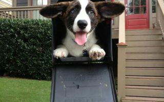 Meet The Mailcorgs!
