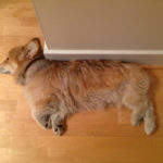 Time Machine Tuesday: 13 More Helpful Corgis Holding Up Walls!