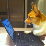 Stuff The Tech Support Corgi Says