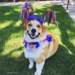 Happy 4th of July, America!