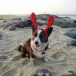 Dora Explores the Jersey Shore: A Corgi-licious Vacation!