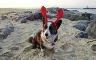 Dora Explores the Jersey Shore: A Corgi-licious Vacation!