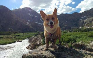 Peaches Climbs Every Mountain, Corgs Every Stream!