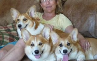 Meet The Dimaio Pack: Darcy, Pippa and Kailyn!