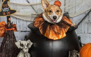 Last Minute Casting Call: Send Me Your Corgi-ween Pics!