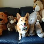 Ten Toothsome Tuesday Corgi Smiles!